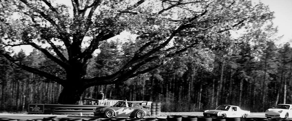 Oak tree-1